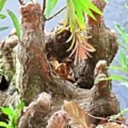 Tree Stalactites Poster