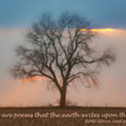 Tree - Sunset - Quotation Poster