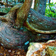Tree Trunk By Jordan Pond In Acadia National Park-maine Poster