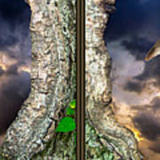 Tree Trunk Portal - 3d Stereo X-view Poster