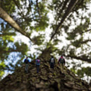 Tree Walkers Poster