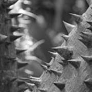 Tree With Spikes And Thorns Poster