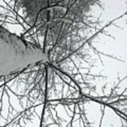 Tree Wrapped In Snow Poster
