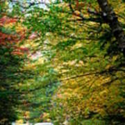 Trees Along The Flumes Trail Poster