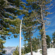 Trees And Snag At Crater Lake Poster