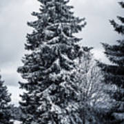 Trees And Snow Poster