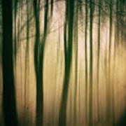 Trees At Dawn Poster