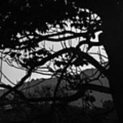 Trees Black And White - San Salvador Poster
