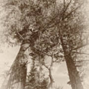 Trees Colliding Poster