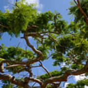 Trees In Bermuda Poster