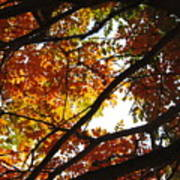 Trees In Fall Fashion Poster
