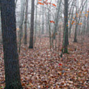 Trees In Foggy Fall Woods Poster