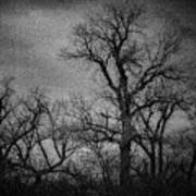 Trees In Storm In Black And White Poster