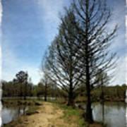 Trees In Water Garden Poster