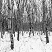 Trees In Winter Snow, Black And White Poster