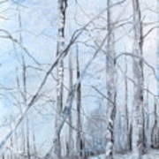 Trees In Winter Snow Poster