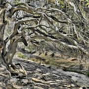 Trees Of Ziarat Poster