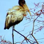 Treetop Stork Poster