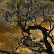 Treetop Sunset Poster