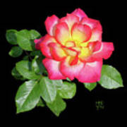 Tri-color Pink Rose2 Cutout Poster