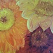 Tri Colored Daisies Poster