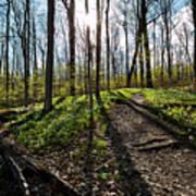 Trillium Trail Poster