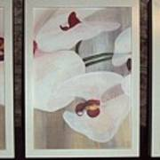 Triptic White Orchids On Light Background Poster