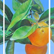 Triptyque Orange Poster