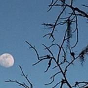 Trompe L Oeil Moon Poster