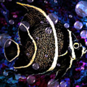 Tropical Angel Fish Poster