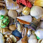 Tropical Beach Seashell Treasures 1550b Poster