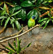 Tropical Bird 3 Poster