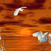 Tropical Birds And Sunset Poster