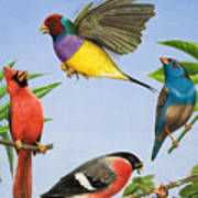 Tropical Birds Poster by RB Davis