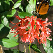 Tropical Butterfly On Flower Poster