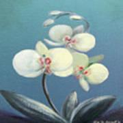Tropical Elegance 2 Poster