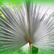 Tropical Fan Poster