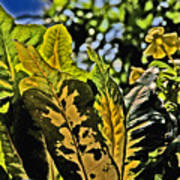 Tropical Foliage A-la Monet Poster