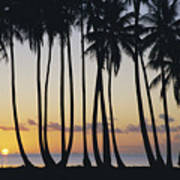Tropical Palm Sunset Poster