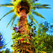 Tropical Palm Tree Painting Poster