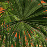 Tropical Palms 1 Poster