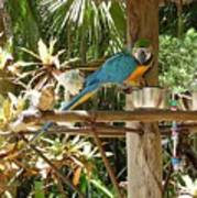 Tropical Parrot Poster