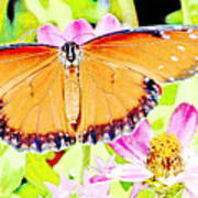 Tropical Queen Butterfly, Soldier Butterfly Poster
