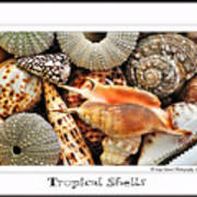Tropical Shells... Greeting Card Poster by Kaye Menner