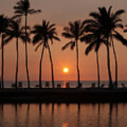 Tropical Sunset Silhouettes  Poster