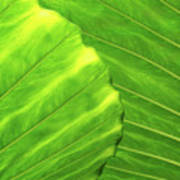 Tropical Vibrant Green Poster