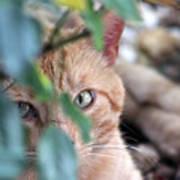 Tucker - The Cat Poster