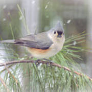 Tufted Titmouse - A Winter Delight Poster