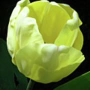 Tulip 0755 Poster
