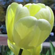 Tulip 0761 Poster